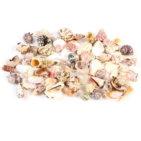 Equipped Indoor Set of Mixed Shells