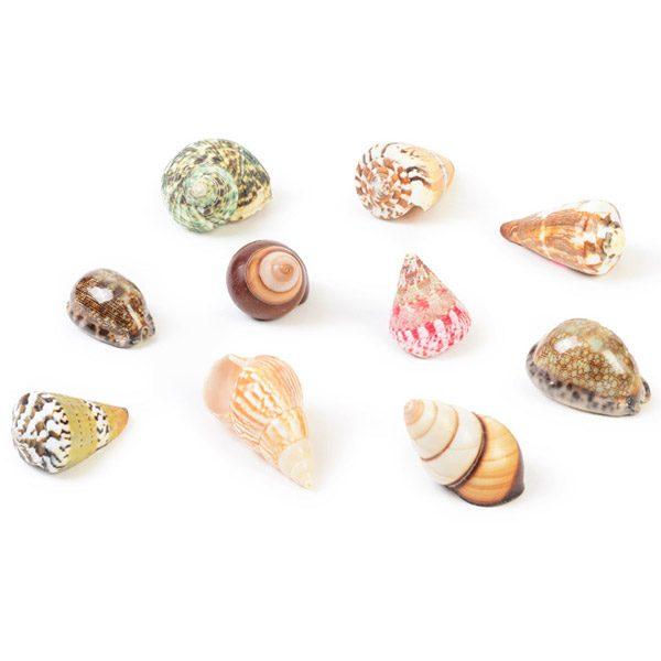Set of Coloured Shells Multicoloured Mixed