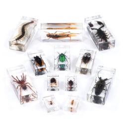 complete bugs collection Set of 12 Bugs