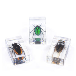Set of 3 Medium Bugs