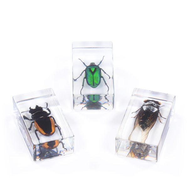 Set of 3 Medium Bugs