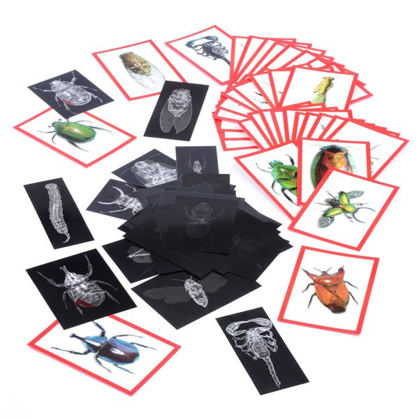 Set of Bug X-Rays & Cards