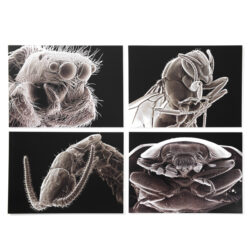 Set of 4 x A3 Bug Photocards