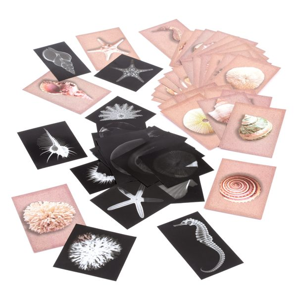 Set of Shell X-rays & Cards