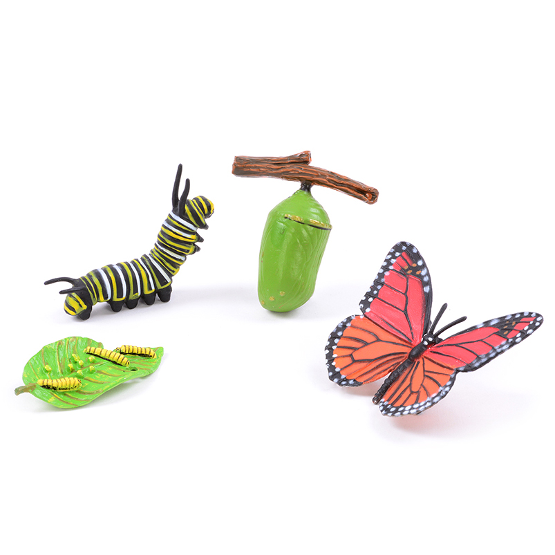 Life Cycle Of A Butterfly EYFS KS1 Scientific Activities