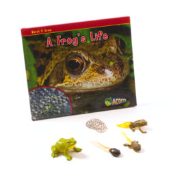 Frog Lifecycle & Book
