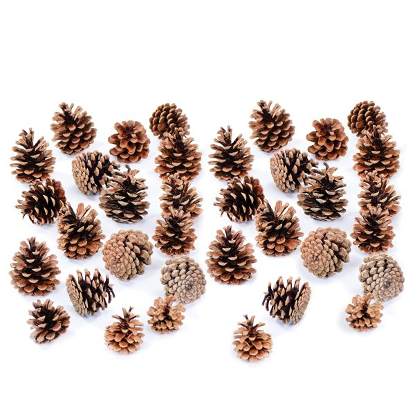 Set of Pine Cones