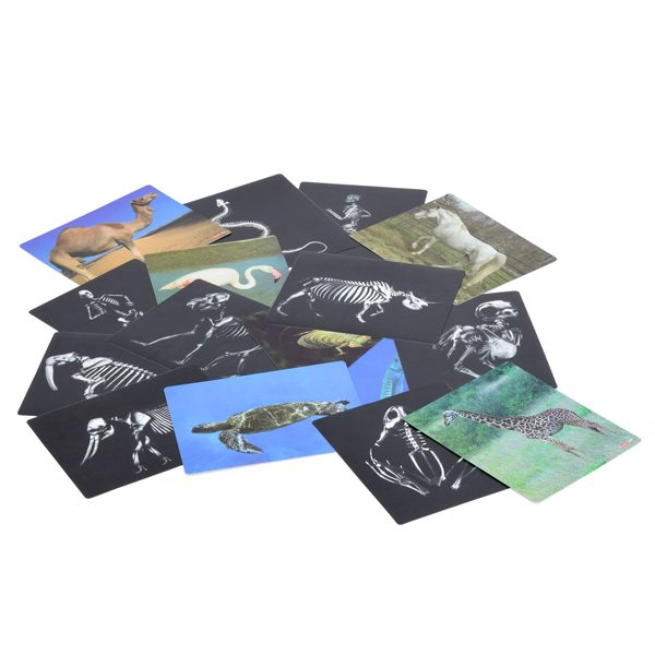 Animal X-Rays & Cards Set