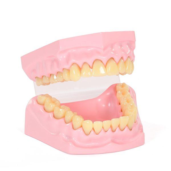 Anatomical Teeth