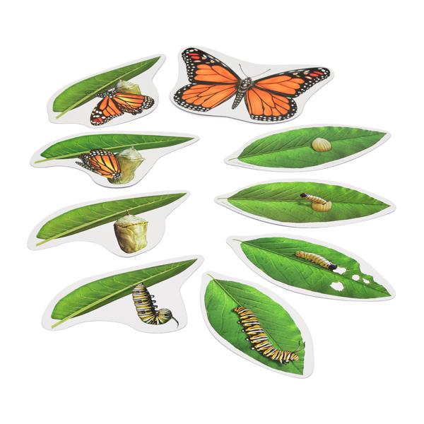 Giant Magnetic Butterfly Life Cycle Science Resources EYFS